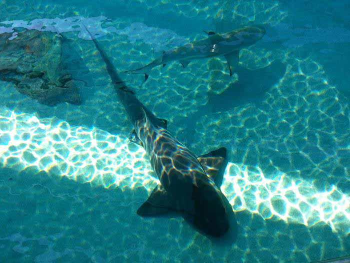 SHARK! Shark pool
